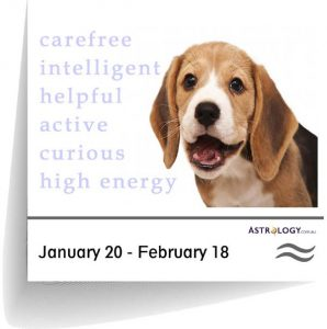 ASTROLOGY-CANINE---AQUARIUS