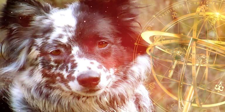 Canine Horoscopes - Pet Astrology | Astrology com au