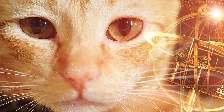 Pet - Astrology - Feline