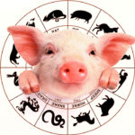 2019 EARTH PIG CHINESE HOROSCOPE