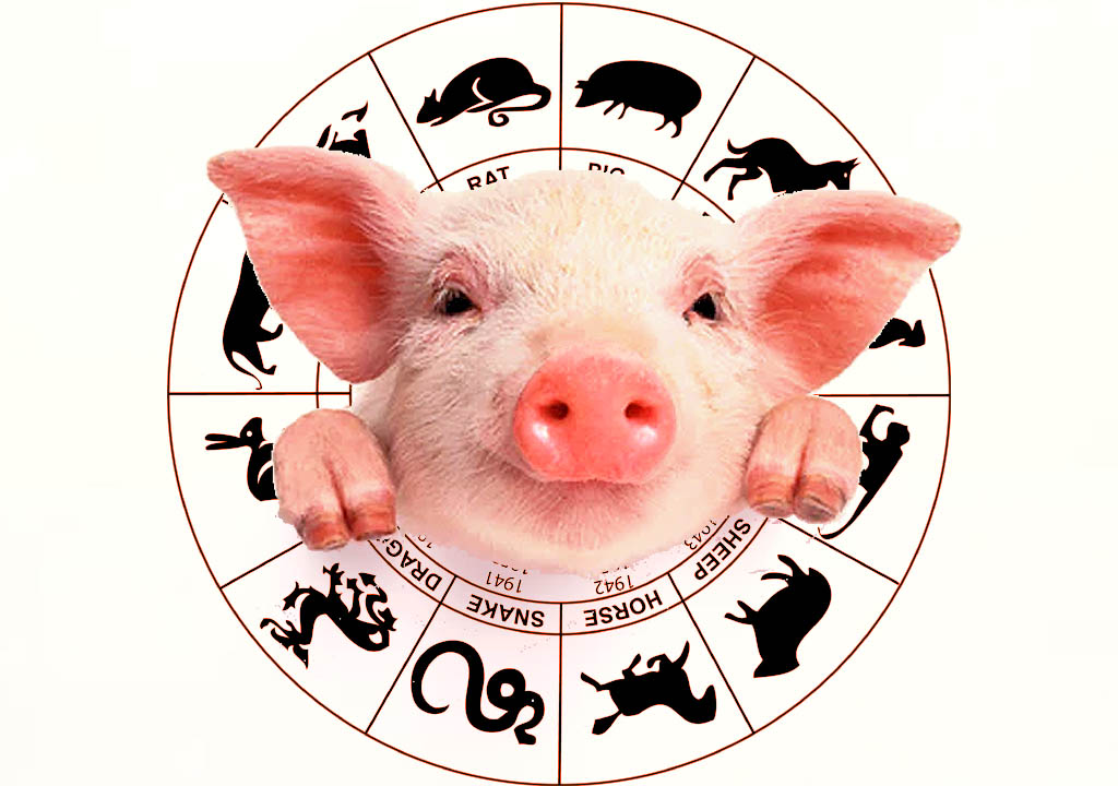 2019 Year of the Earth Pig Chinese Horoscope