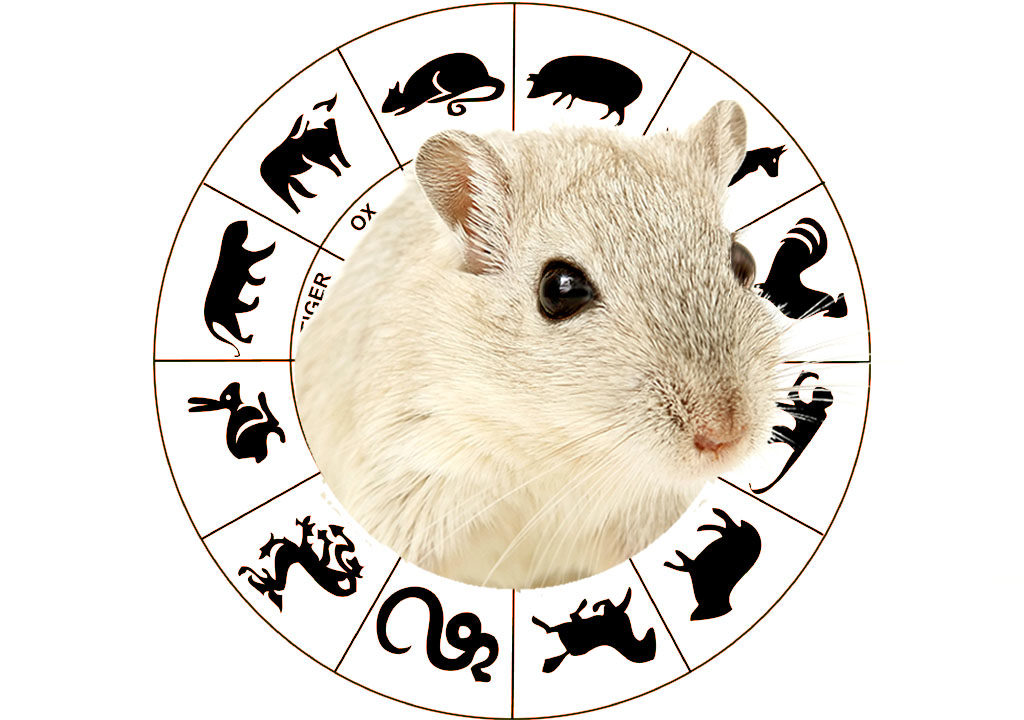 2020 YEAR OF THE METAL RAT CHINESE HOROSCOPE FORECAST