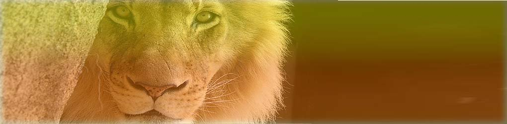 LEO PERSONALITY AND INFLUENCE